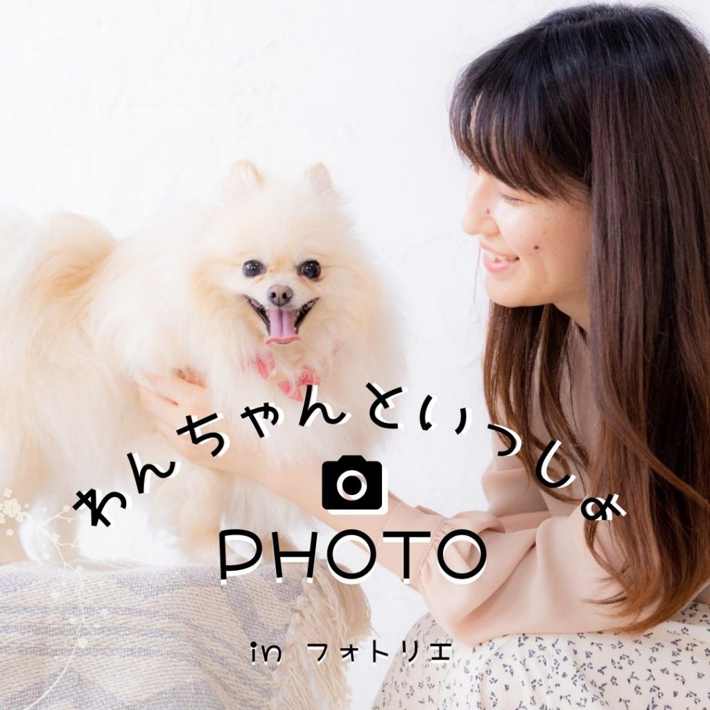 仙台でペットの写真撮影